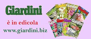 Banner_Petra-giardini